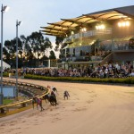 The bumper crowd takes in the racing action