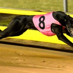 Keybow wins the Group 3 Silver Bullet in 29.71sec