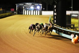 Thirty Talks draws box one in Silver Chief final