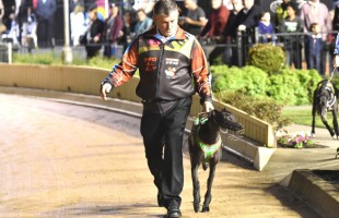 Brad Hill Billy flying interstate flag in Group 1 Hume Cup