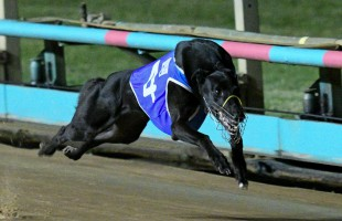 Champs to clash on Grand Final night at The Meadows!