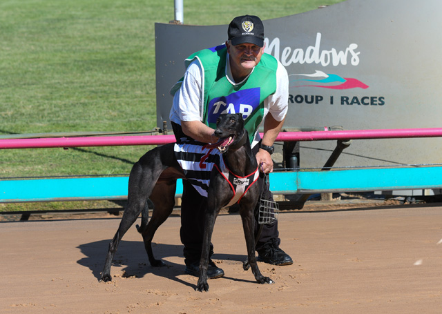 race 11 tider dusty