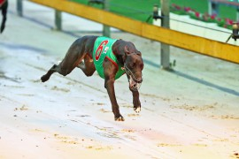 Slick ready to fire in Group 1 Temlee