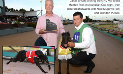 Victorian breeder flies high on Australian Cup night