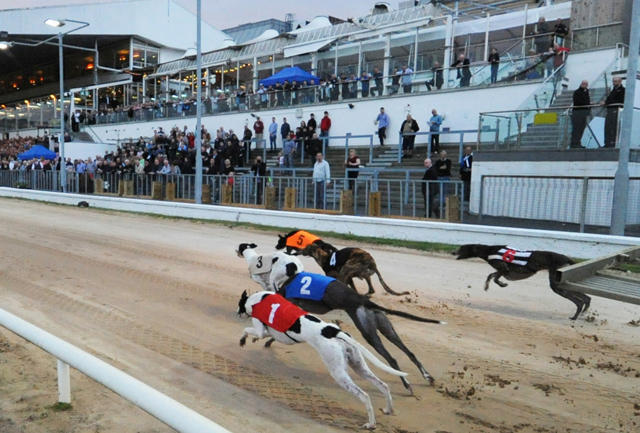 Irish Greyhound Racing