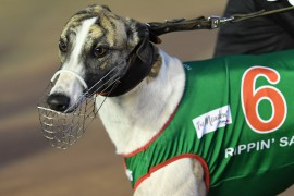 Brothers to clash in Group 3 Destini Fireball