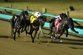 AUSTRALIAN CUP: She's Gifted out, Shima Breeze in