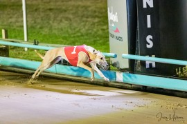 Champ Orson Allen chasing more Group 1 glory