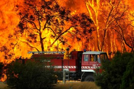 The Meadows Greyhounds to support bushfire fundraising efforts