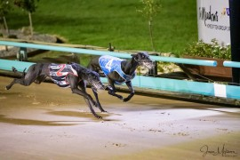 Reid's Runners all a show at The Meadows on Wednesday