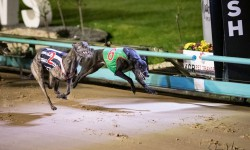 Wendalin Bale leads the Grenfells' chances on Saturday night