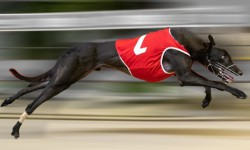 Good Juan ready for Victorian debut