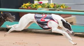 Wednesday Meeting Preview