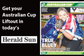 Consistency the key to Bluey's red-hot form