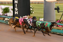 Wednesday Race Preview