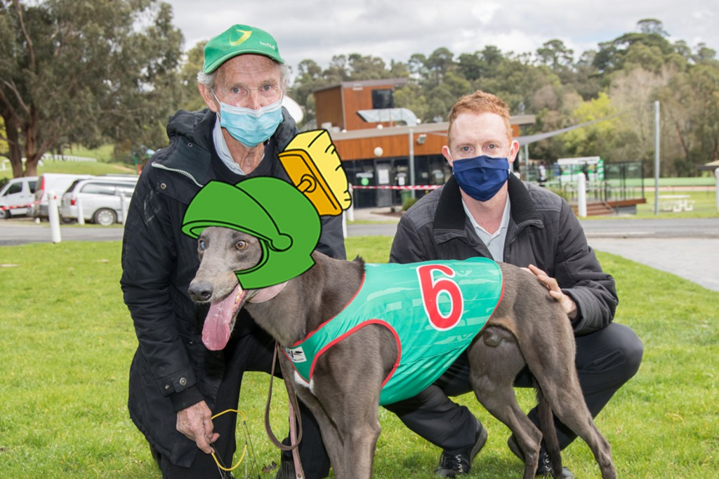 A striking dog with multicoloured eyes, Mighty Marvin is looking to bounce back onto the winner's list