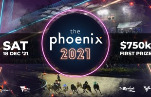 THE PHOENIX – Everything you need to know!